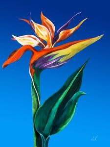 Bird of Paradise - Albert Kopper