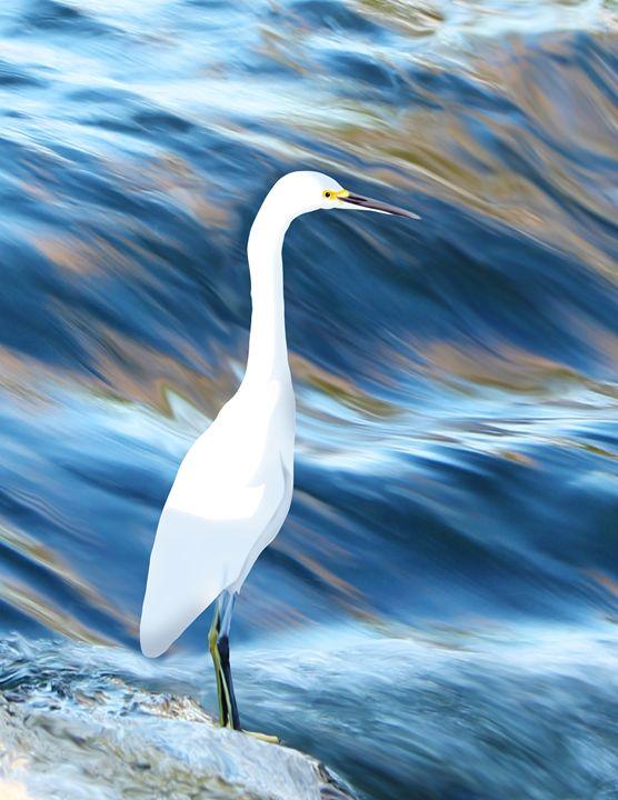 White Bird - Albert Kopper