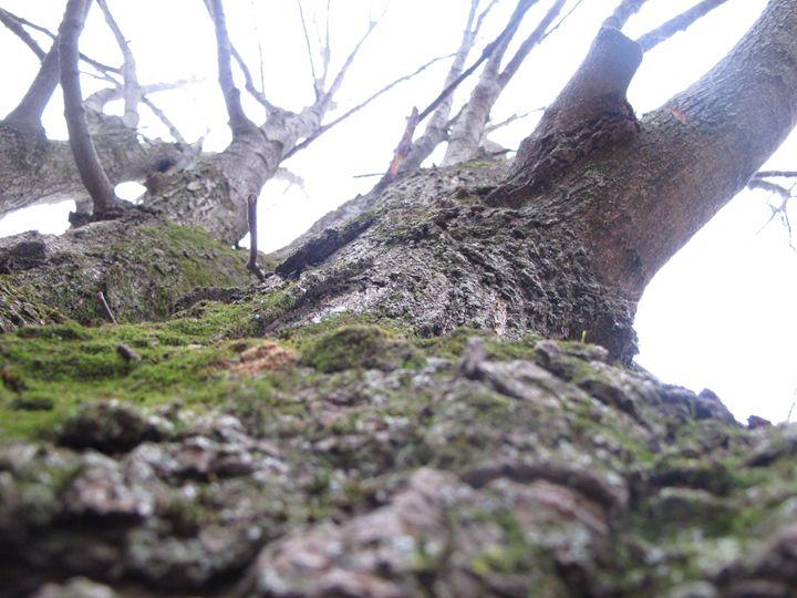 The Tree - Eva Jane Photography