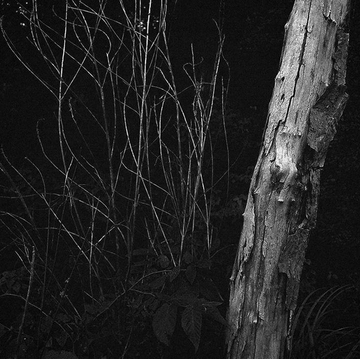 Swampland - Elle Tobias Photography