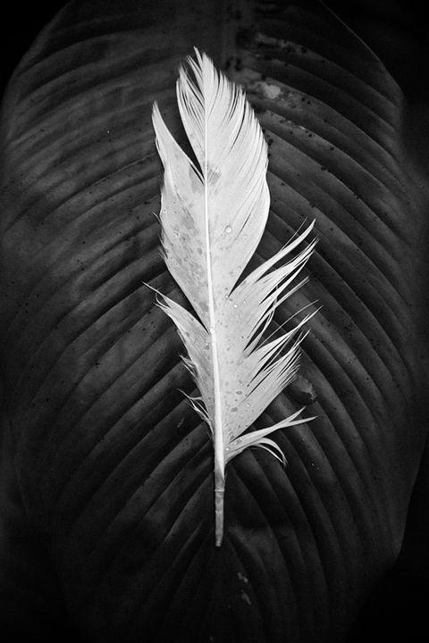 Wilson - Elle Tobias Photography