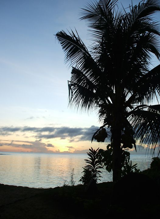 Coconut Sunset - OliviaG