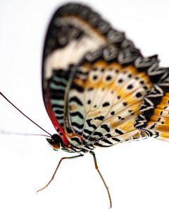 Delicate Beauty #1