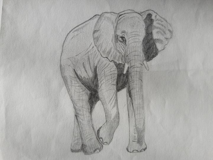 African Elephant - Sam