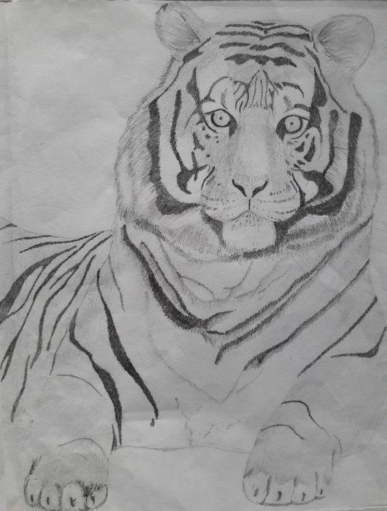 Tiger - Sam