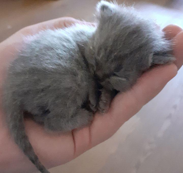 Little Blue - Sam