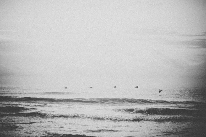 Just a Flock of Birds - Torrin Nelson Photography
