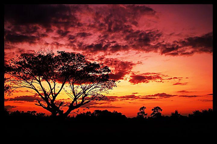 Sunset Tree - D. van Doorn