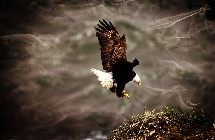 Eagle Landing - D. van Doorn