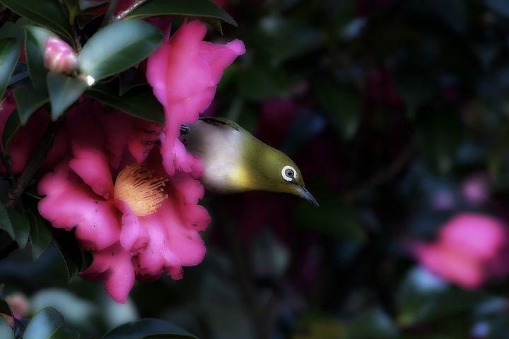 Spring Bird - D. van Doorn