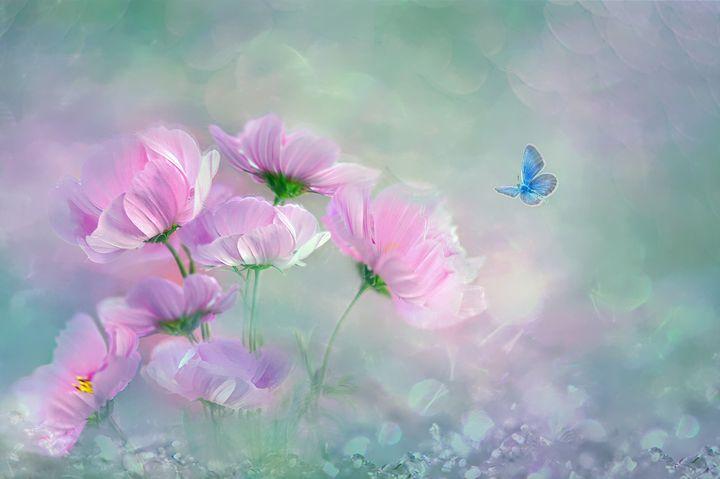 Spring Butterfly - D. van Doorn
