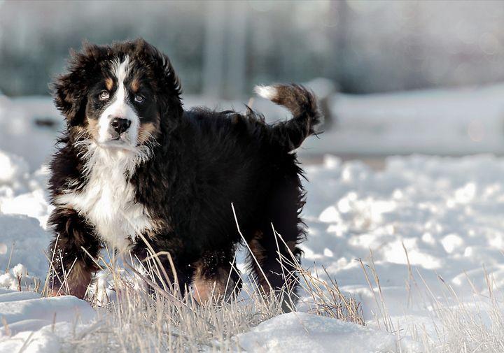 Winter Dog - D. van Doorn