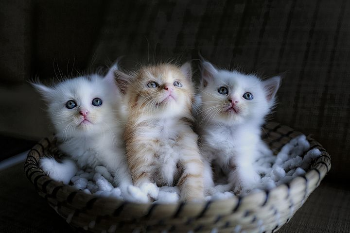 Basket of Cuteness - D. van Doorn
