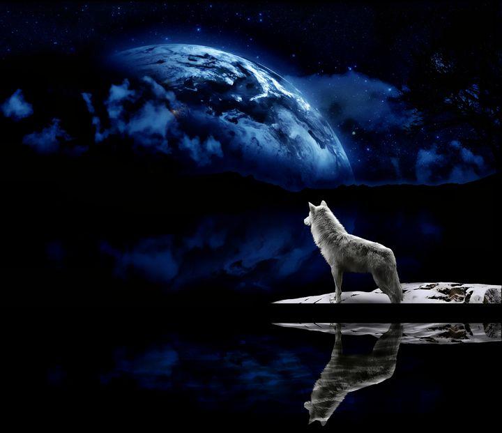 Cosmic Wolf - D. van Doorn
