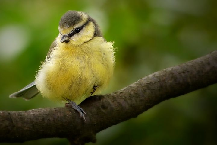 Bird 2 - D. van Doorn