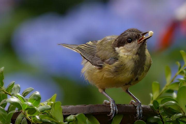 Bird - D. van Doorn