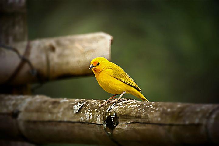 Bird Focus - D. van Doorn