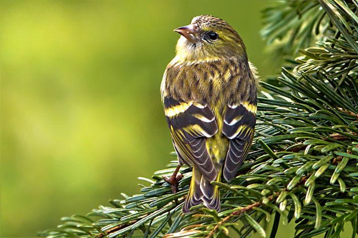 Bird Portrait - D. van Doorn