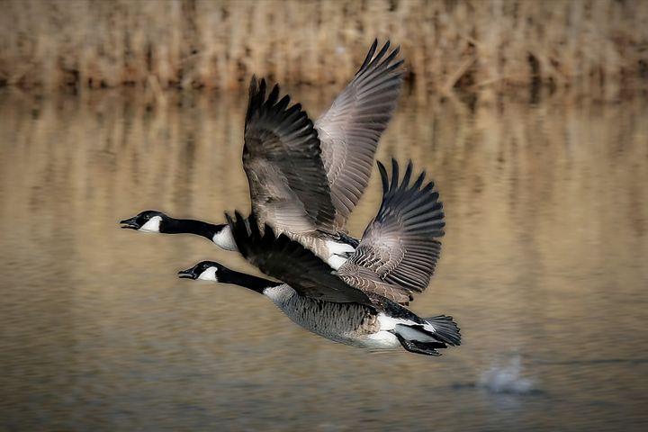 Bird Takeoff - D. van Doorn