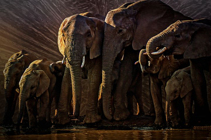 Elephant Watering Hole - D. van Doorn