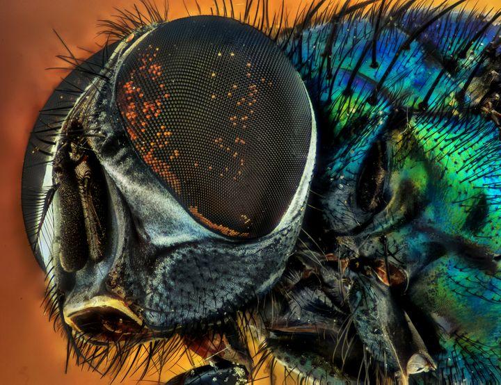 Bug Eyed - D. van Doorn