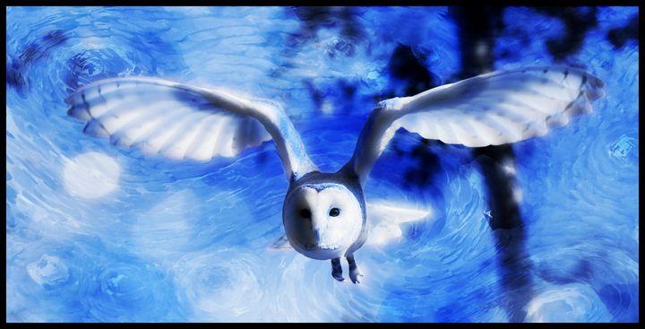 Barn Owl - D. van Doorn