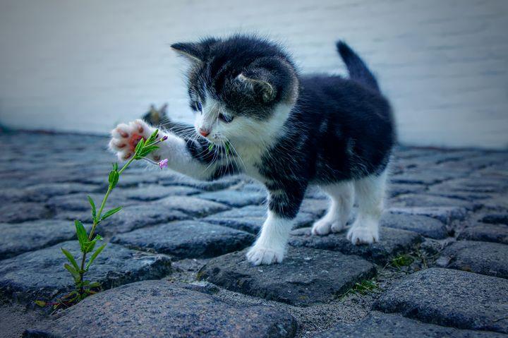 Cute Kitten - D. van Doorn