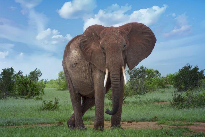 Elephant 2 - D. van Doorn