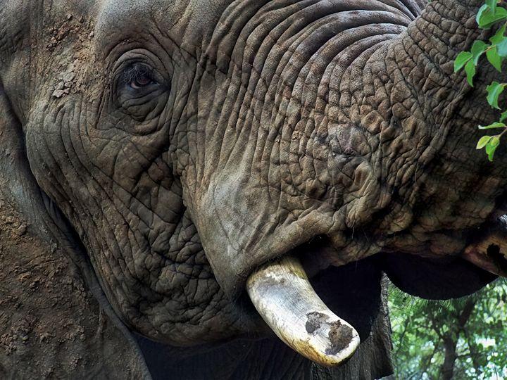 Elephant - D. van Doorn