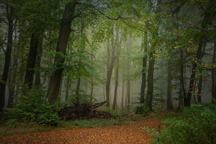 Forest - D. van Doorn