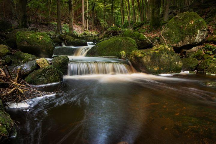 Forest Falls - D. van Doorn