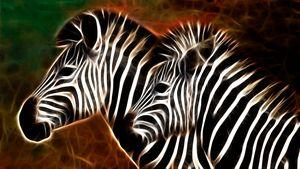 Zebra Portrait - D. van Doorn