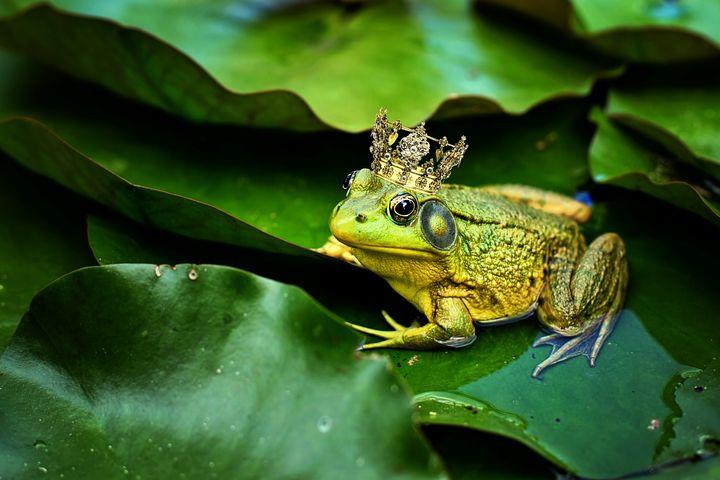 Frog Prince - D. van Doorn