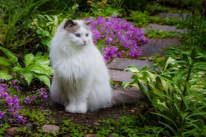 Garden Cat - D. van Doorn