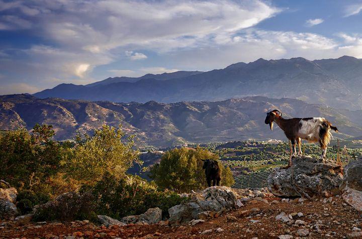 Goat View - D. van Doorn