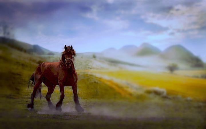 Horse Portrait - D. van Doorn