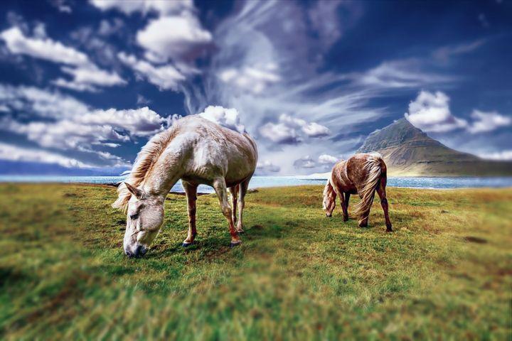 Horses - D. van Doorn