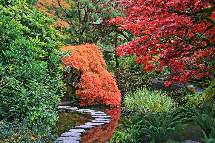 Japanese Garden - D. van Doorn