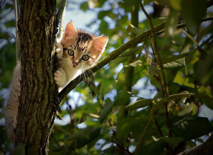 Kitten in a Tree - D. van Doorn