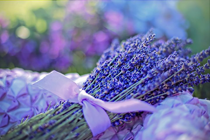 Lavender - D. van Doorn