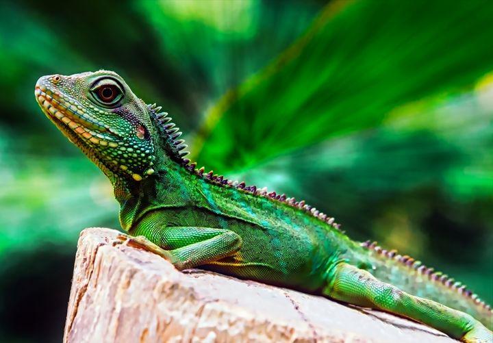 Lizard Portrait - D. van Doorn