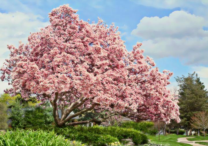 Magnolia Tree - D. van Doorn