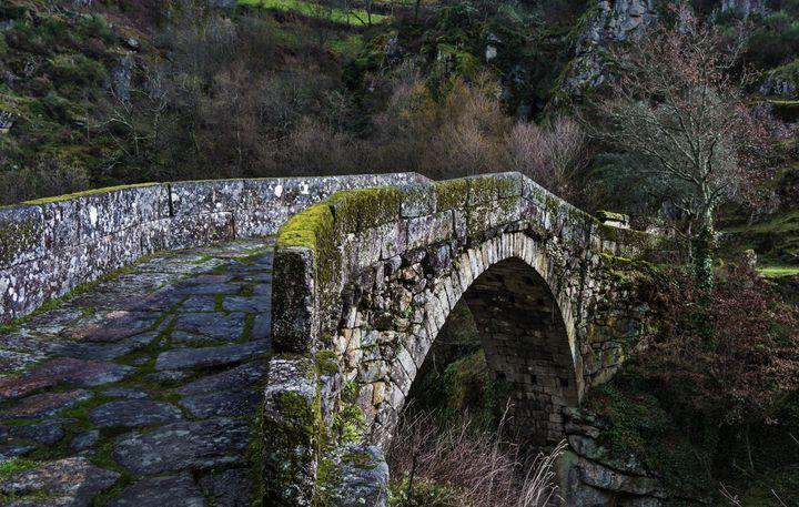 Mossy Bridge - D. van Doorn
