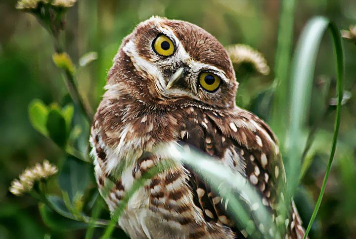 Owl 2 - D. van Doorn