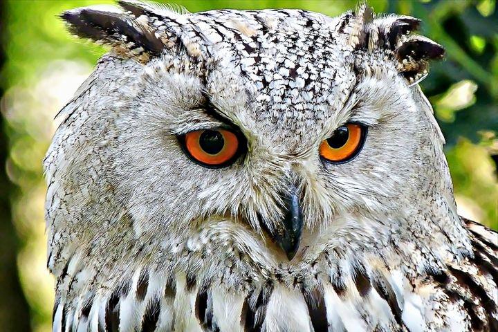 Owl - D. van Doorn