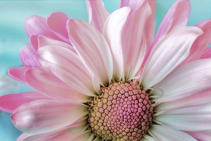 Pastel Flower - D. van Doorn