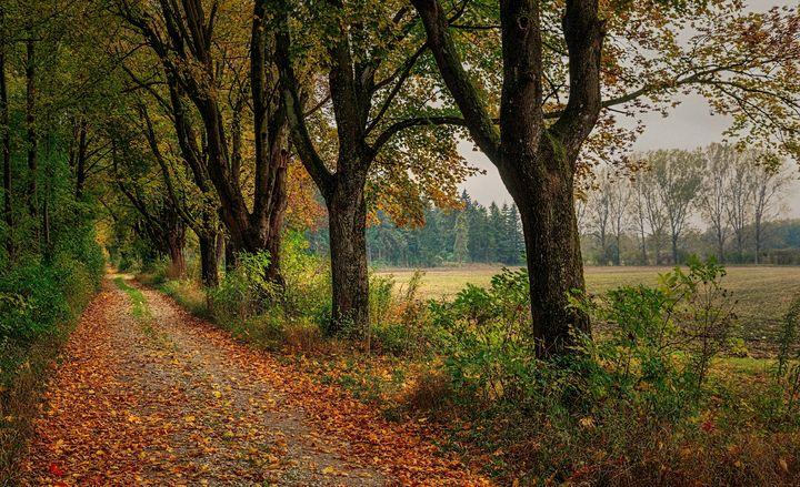 Fall Road - D. van Doorn