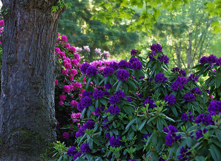 Summer Flowers - D. van Doorn
