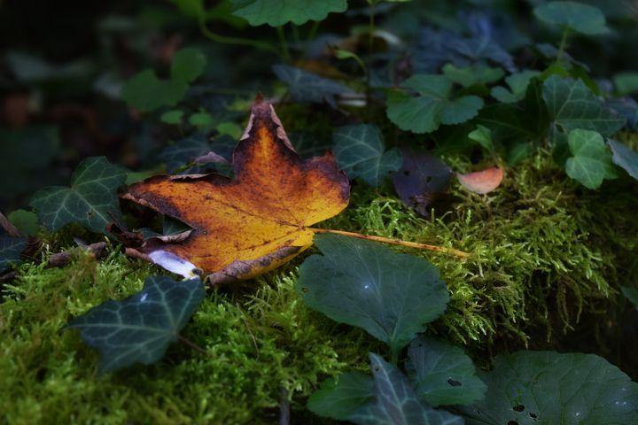 Autumn Leaf - D. van Doorn