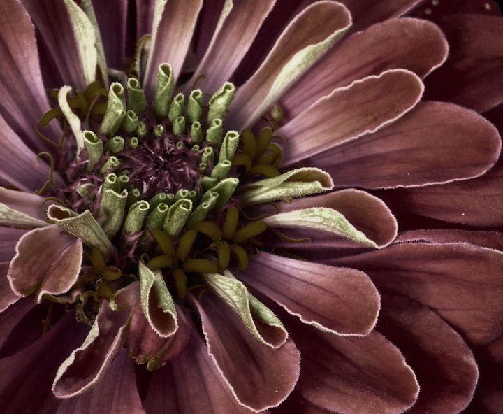 Flower - D. van Doorn